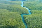 SALVARE L'AMAZZONIA