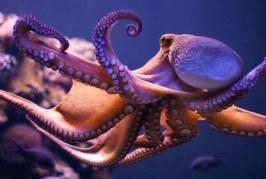 CAMBIAMENTI OCEANI: BENEFICIO PER…