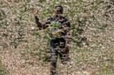 LE LOCUSTE INVADONO IL CORNO D'AFRICA