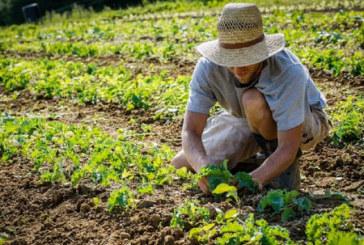 COLDIRETTI AGRICOLTURA IN GINOCCHIO
