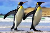 MERAVIGLIOSI PINGUINI