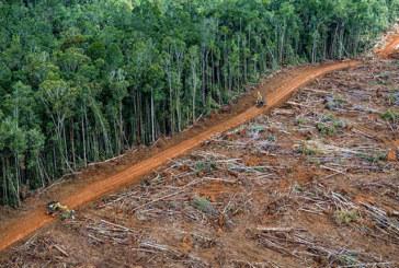 AMAZZONIA IN SERIO PERICOLO